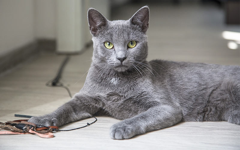 100 Great Names For Grey Cats From The Happy Cat Site