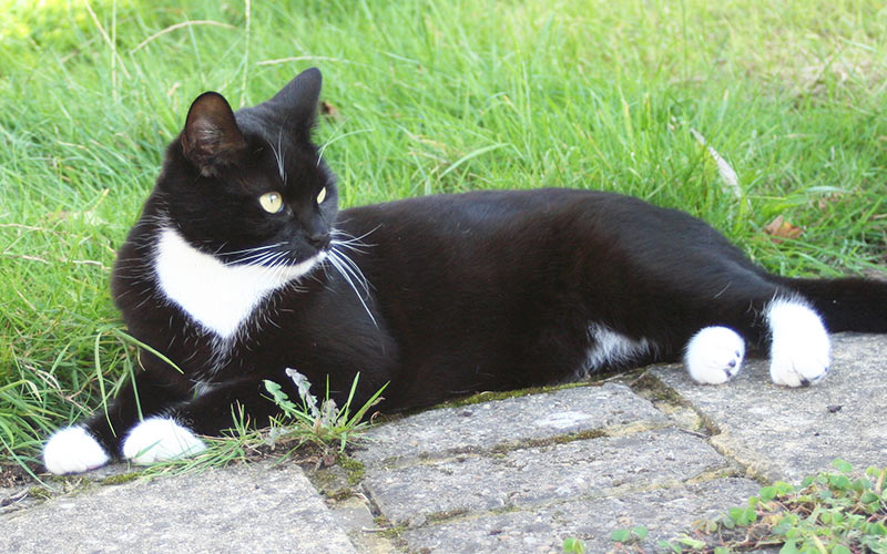 black and white cat in garden