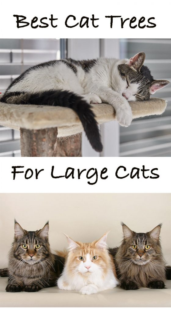 Best cat trees for large cats extra large cat trees for for Cool cat perches