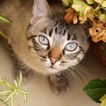 Why Do Cats Eat Plants and How To Stop Them