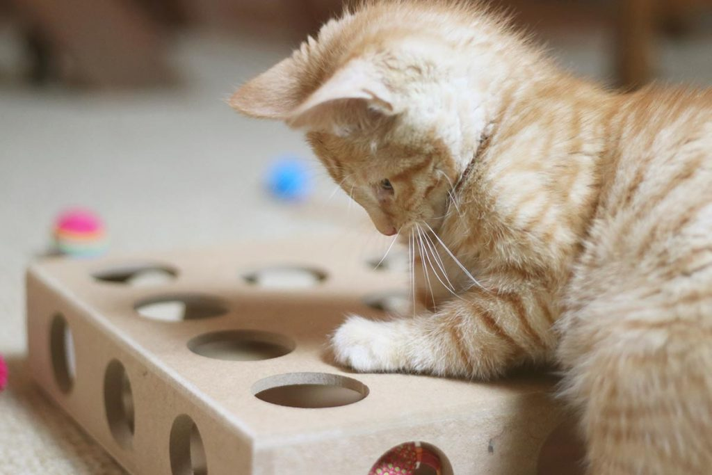 Best Kitten Toys for 2017