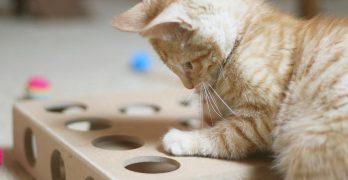 Best Kitten Toys for 2017 – Chosen By A Kitten!