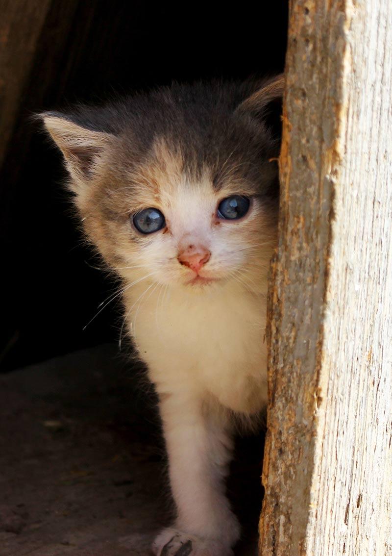 female kitten not spayed