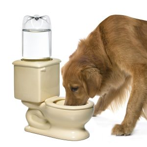 drinking station toilet for cats and dogs