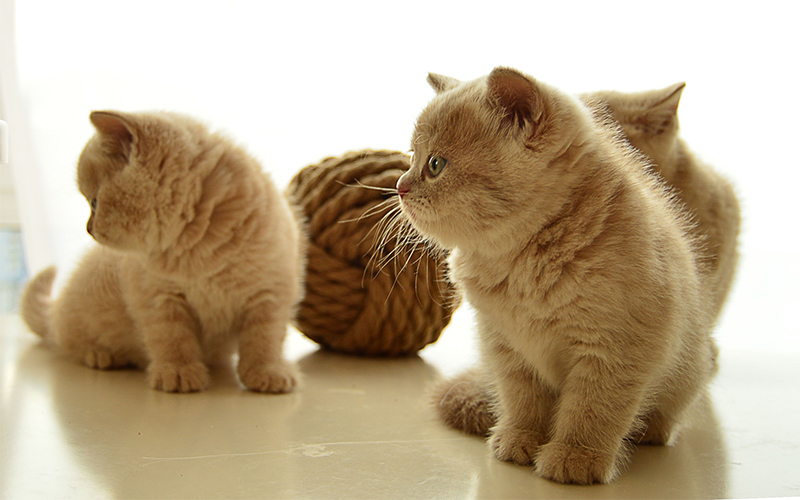 Cute Unique Cat Names - 200 Great Ideas For Cute Cat Names