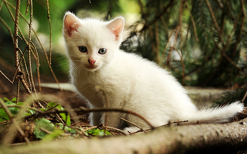White Female Cat Names - ideas and inspiration for girl cat names