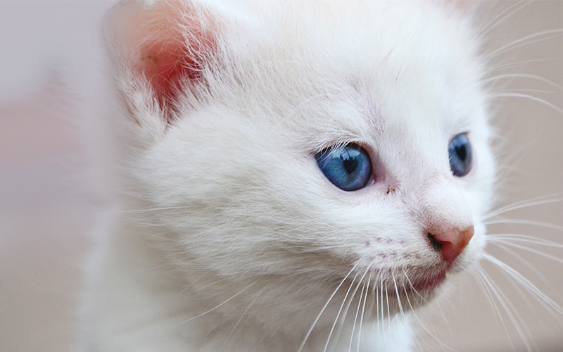 Cute Names For White Cats - 200 Cute Cat Names By Topic
