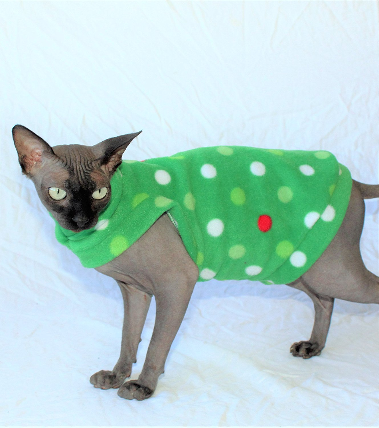 Sphynx Cat Find Out About Life With A Hairless Cat Breed