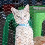 What Is A Cattery? A Guide To Boarding Catteries And Breeding Catteries