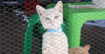 What Is A Cattery And How To Find The Best One