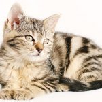 Cool Cat Names – Over 300 Cool Names For Cats