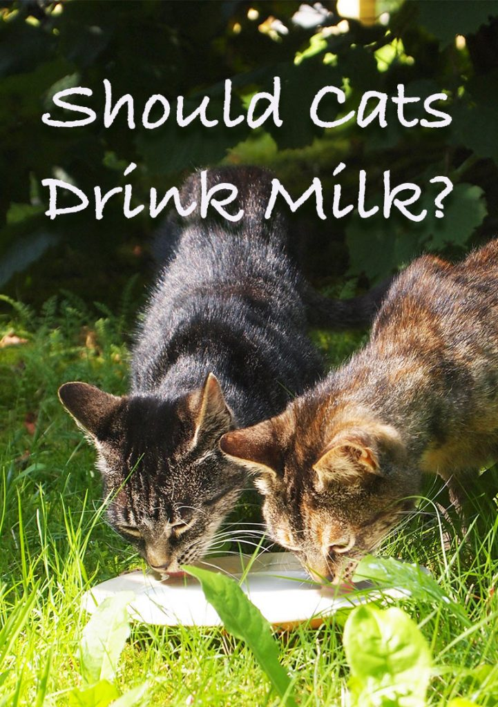 Can Cats Drink Milk? And if so what kind of milk can cats drink?