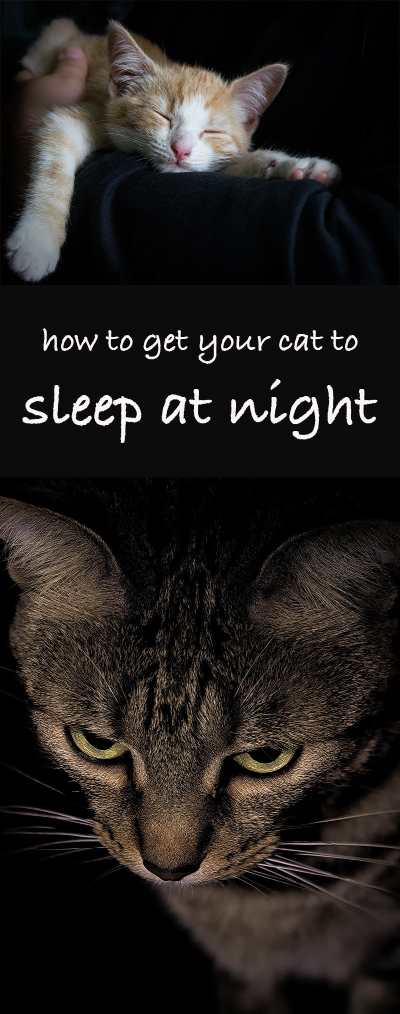 how to get your cat to sleep at night