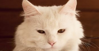Names For White Cats – Our Top 100 White Cat Names