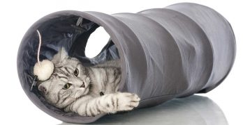 Cat Tunnels – Choosing And Using A Cat Tunnel