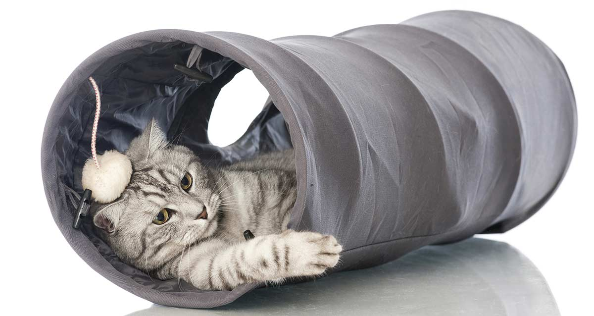 Cat tunnel - a great toy for your cat