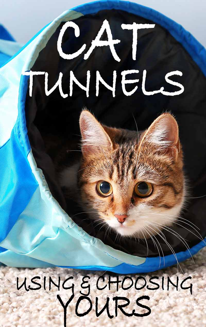 Using and choosing the best cat tunnel for your cat