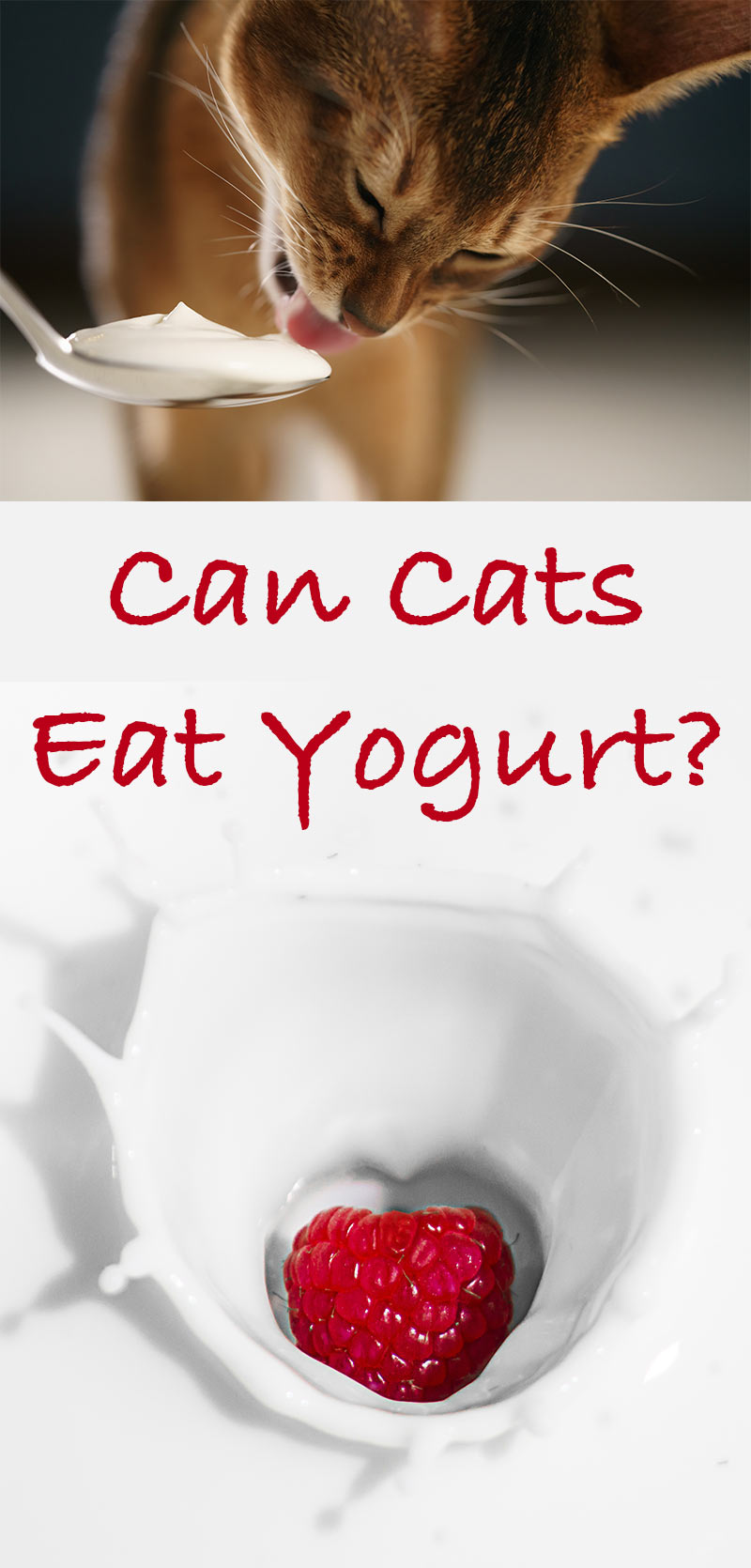 Can Cats Eat Yogurt A Cat Food Safety Guide From The Happy Cat Site