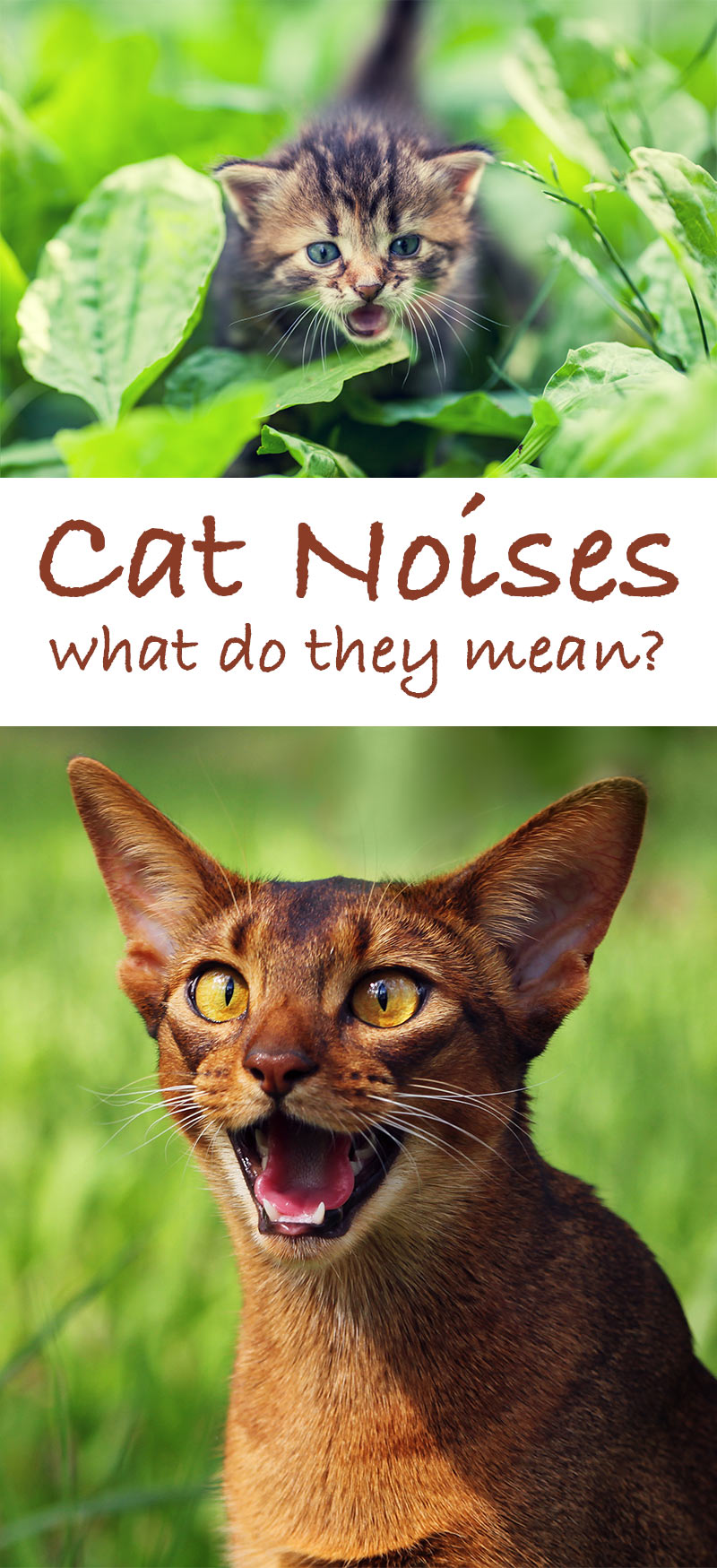 Kitty Sounds - A guide to cat noises and their meanings