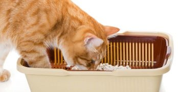 best automatic litter box reviews
