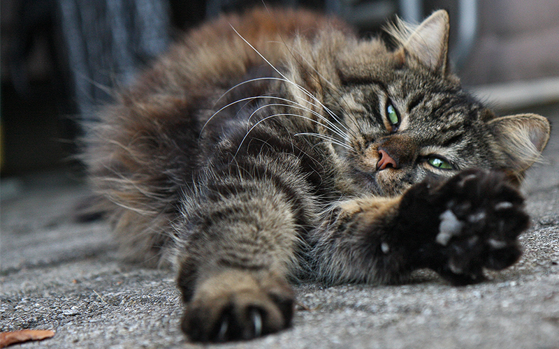 Why Does My Cat Stretch When He Sees Me? - The Happy Cat Site