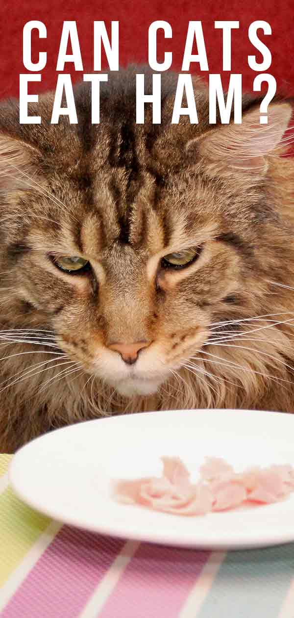 Can Cats Eat Ham As Snacks, Or Have Ham As Part Of Their Diet?