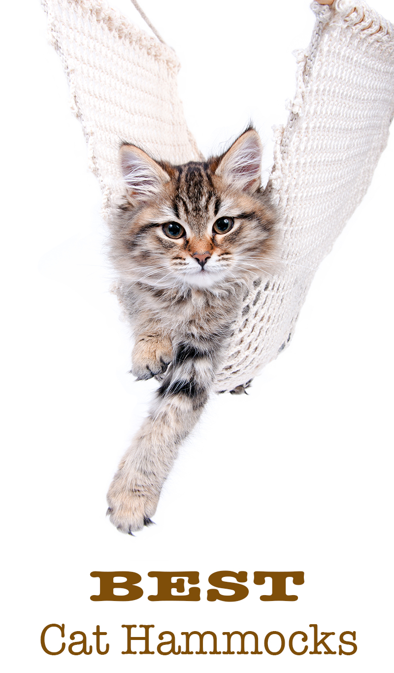 best cat hammocks best cat hammocks for cute kitties   reviews and tips for choosing  rh   thehappycatsite