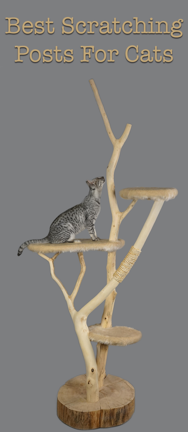 best scratching posts for cats