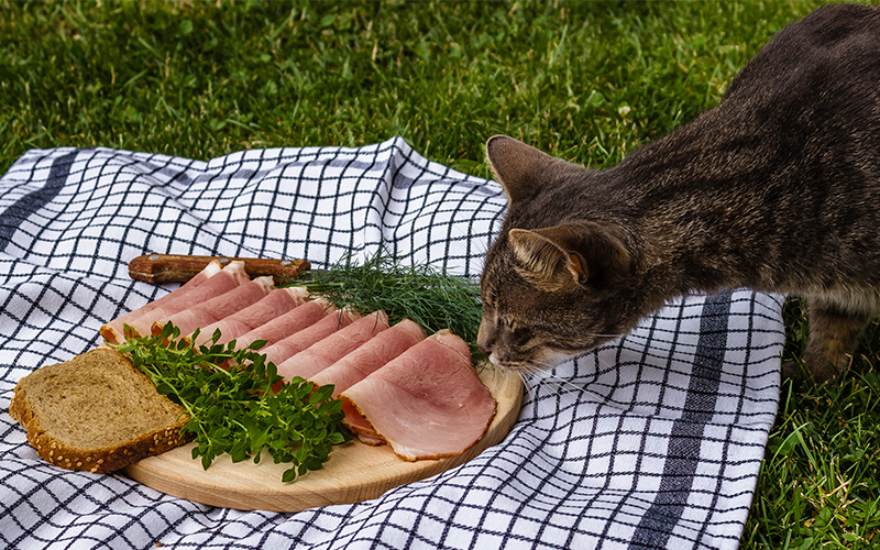 can cats have ham