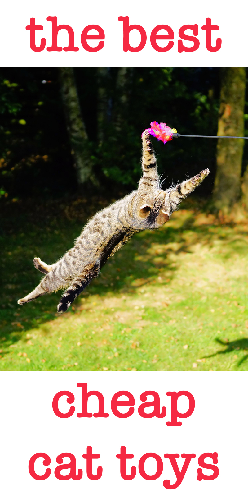 best cheap cat toys