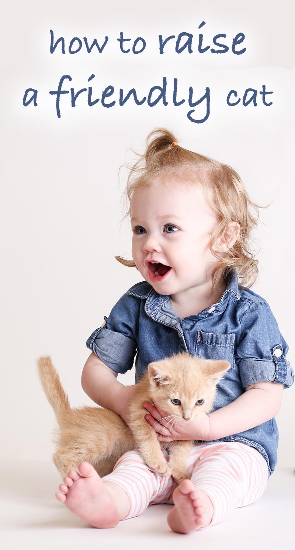 how to raise a friendly kitten
