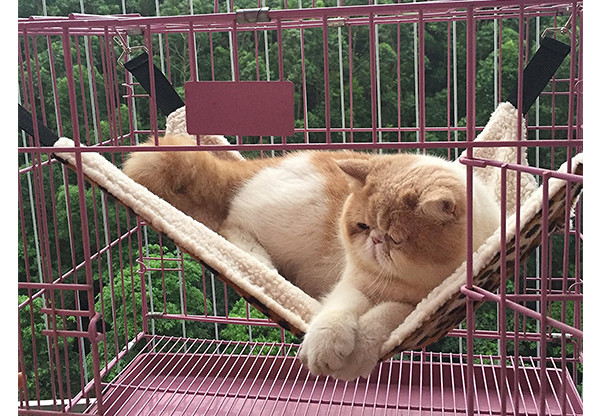 cat hammock  it easily attaches to a crate or cage  best cat hammocks for cute kitties   reviews and tips for choosing  rh   thehappycatsite