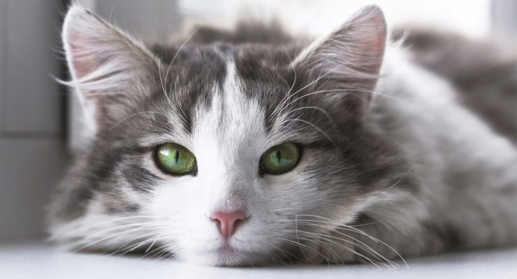 How Long Do Cats Live? A Guide To Cat Lifespan