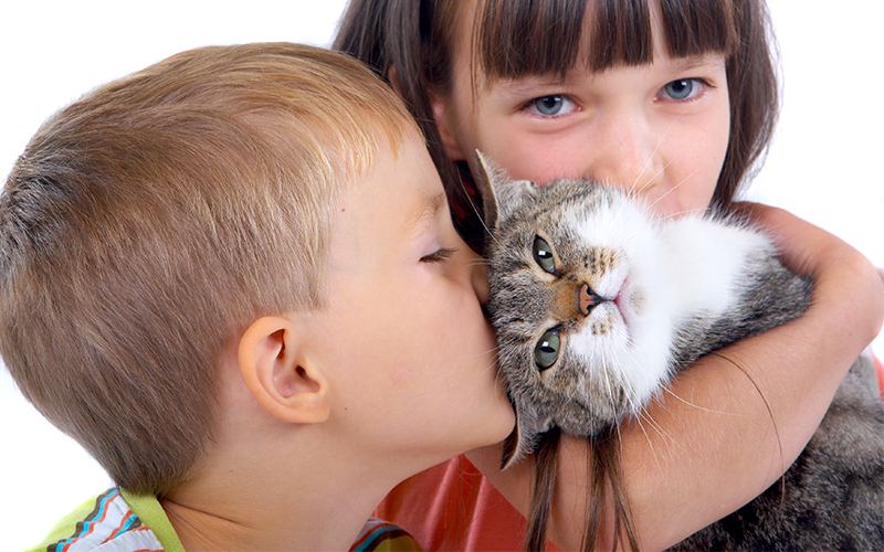 how to raise a friendly cat