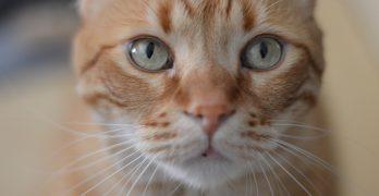 Orange Cat Names – 135 Amazing Names For Ginger Kittens