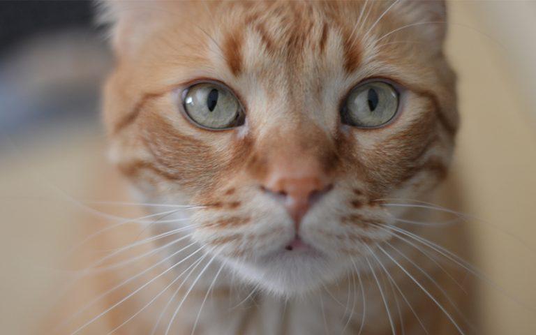 orange cat names