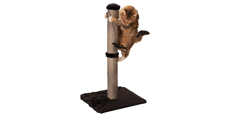 cat scratching pole