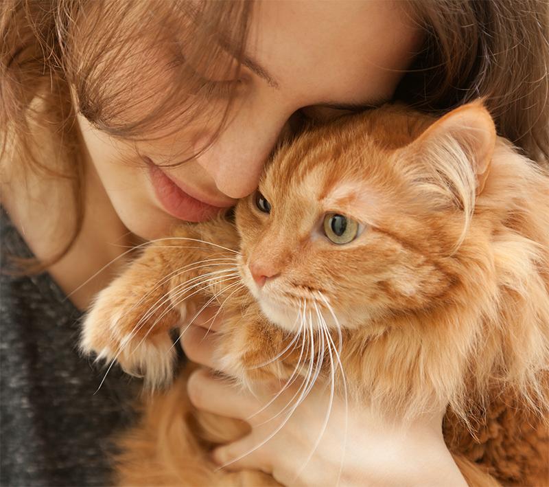 raising a friendly cat