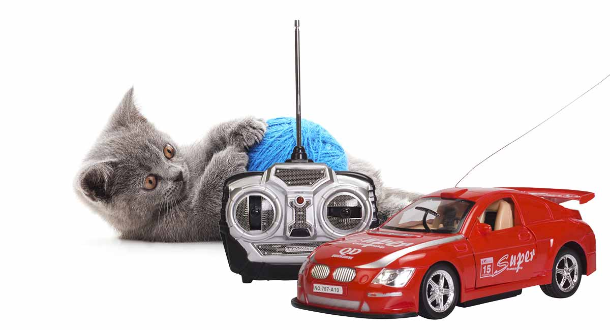 best remote control cat toy