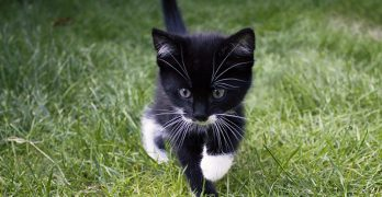 Black And White Cat Names – 250 Awesome Ideas
