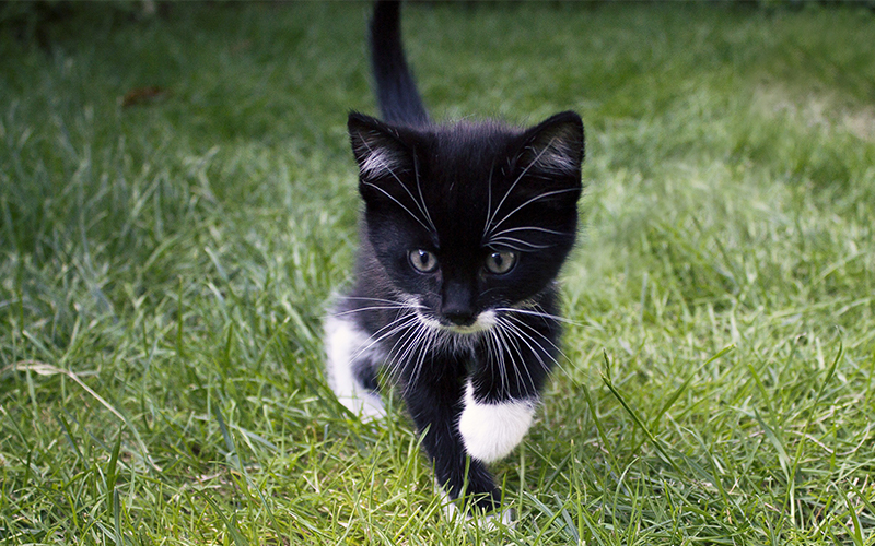 Black And White Cat Names 250 Cool Kitty Ideas
