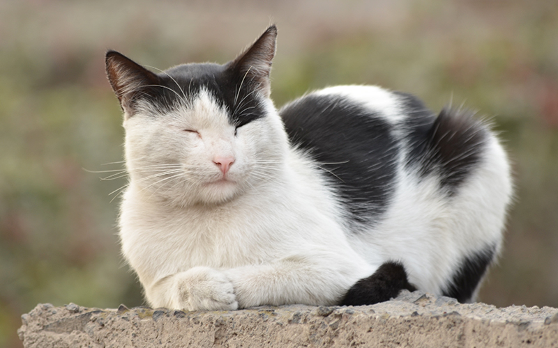 what is the best cat repellent spray