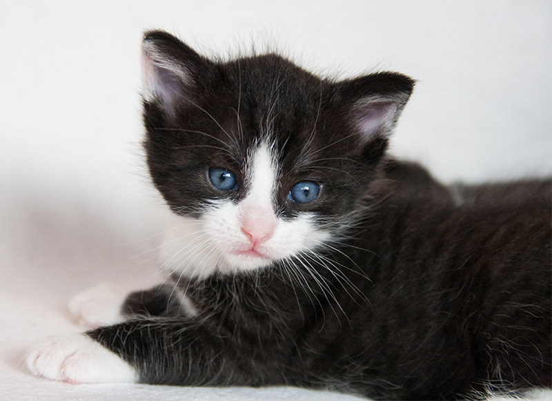 Best black and white cat names