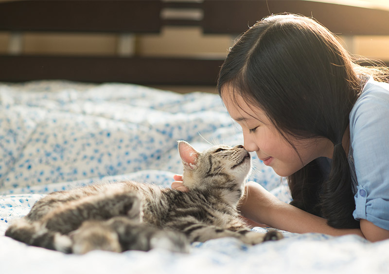 how to bond with your cat
