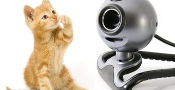 Best Cat Cameras and Kitty Monitors