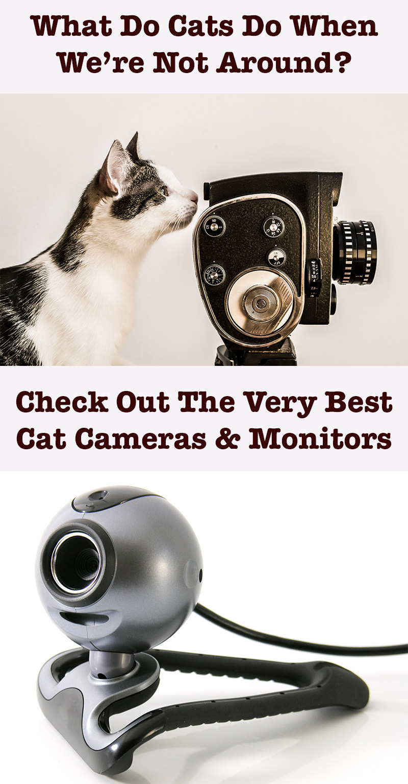 A plete Guide The Best Cat Cameras And Monitors