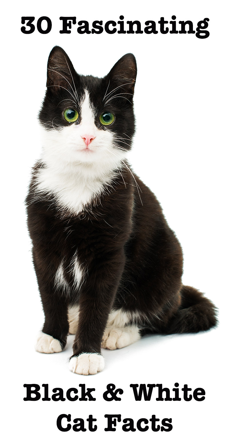 30 Black And White Cat Facts
