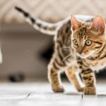30 tabby cat facts