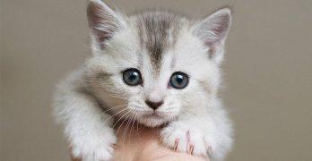 best treats for kittens