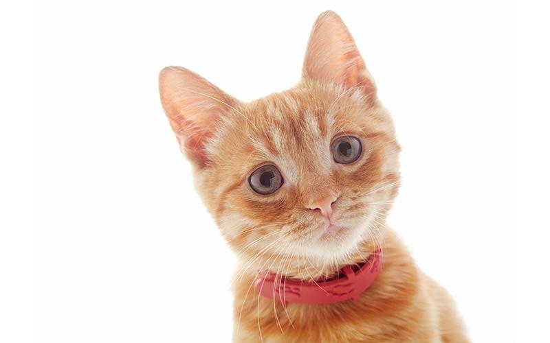 best kitten collars
